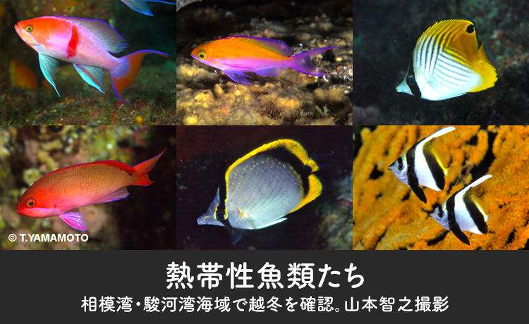 熱帯性魚類たち